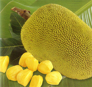Jackfruit cultivation